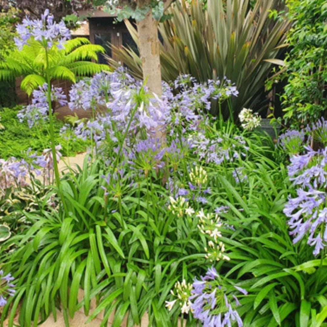 Tracy Garden